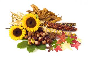 autumn-flowers-and-nuts